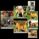 Picture Pedigree